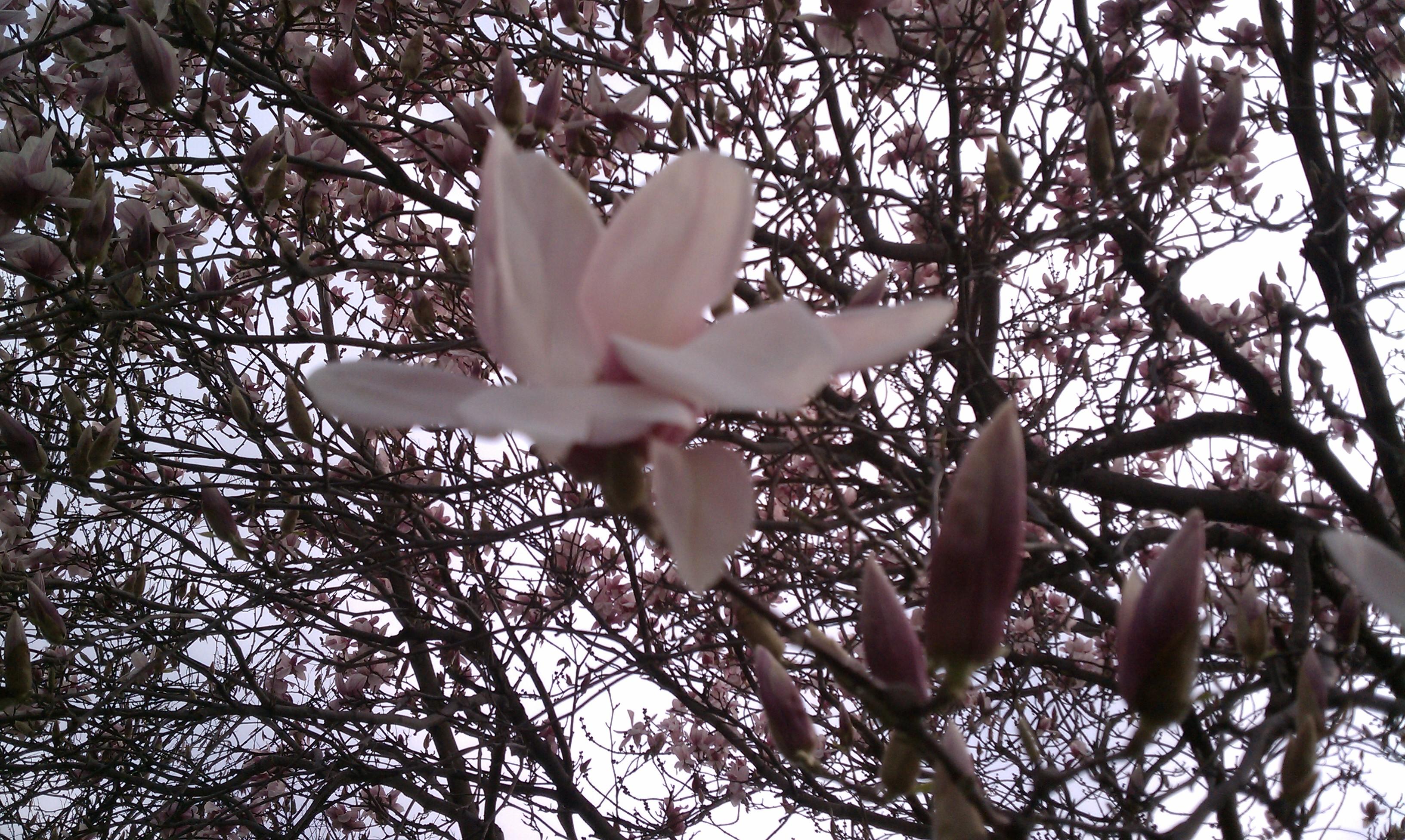 Spring Has Sprung Maybe Finally Again Theresa Hupp Author