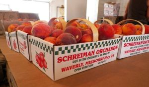 Peaches from Schreiman Orchard
