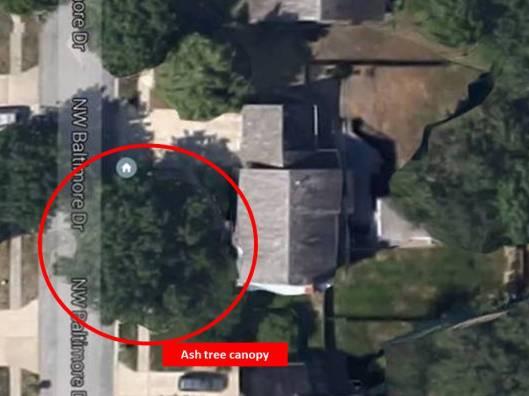 ash tree canopy marked
