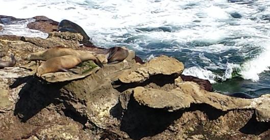 La Jolla sea lions 20160404_150213